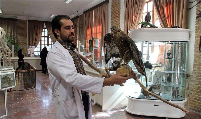 موزه حیات وحش هفت چنار در کدام شهر است؟ تهران