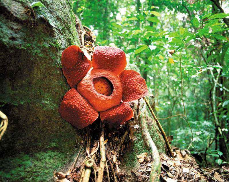 هنگام سفر به مالزی با کودک از طبیعت دیدن کنید!