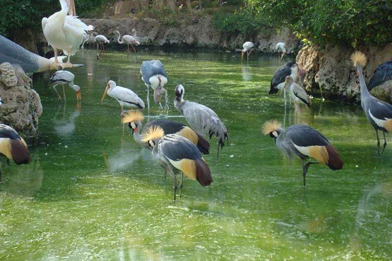 در مسافرت به کرج حتما سری به باغ پرندگان بزنید.
