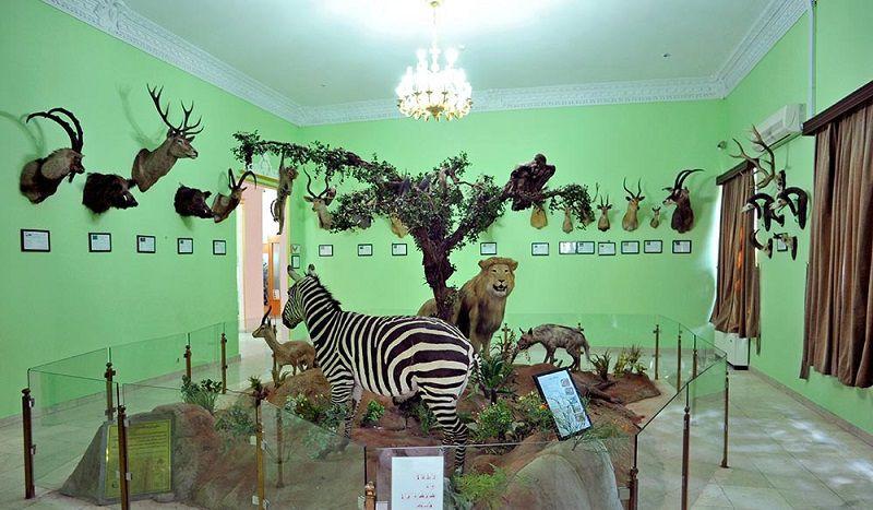 موزه حیات وحش هفت چنار عکس