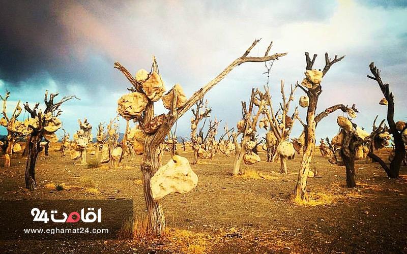 باغ سنگی در سیرجان اثر درویش خان
